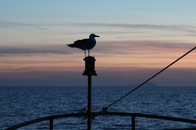 Immagine di un gabbiano in controluce con lo sfondo del mare